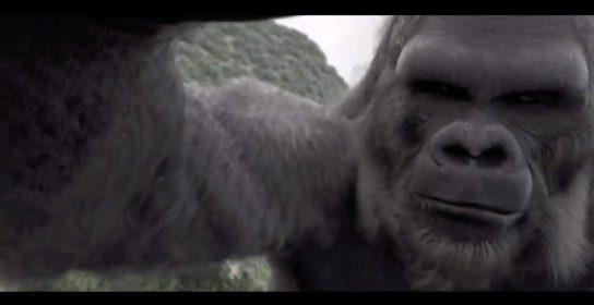 19--Notre-Kong-en-3D-dynamique